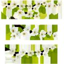 флора, весна, цветы, цветущая вишня, зеленый лист, spring, flowers, cherry blossoms, green leaf, frühling, blumen, kirschblüten, grünes blatt, flore, printemps, fleurs, fleurs de cerisier, feuille verte, flores de cerezo, la hoja verde, fiori, fiori di ciliegio, verde foglia, flora, primavera, flores, flores de cerejeira, folha verde, бабочка