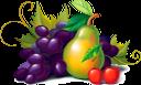 фрукты, виноград, гроздь винограда, винная ягода, виноделие, синий виноград, груша, вишня, obst, trauben, weintraube, weinbeere, weinbereitung, blaue trauben, birne, kirsche, fruit, raisin, grappe de raisin, baie de vin, vinification, raisins bleus, poire, cerise, racimo de uvas, bayas de vino, vinificación, uvas azules, cereza, frutta, uva, grappolo d'uva, bacca di vino, vinificazione, uva blu, pera, ciliegia, fruta, uvas, cacho de uvas, vinho berry, winemaking, azul uvas, pêra, cereja, фрукти, гроно винограду, винна ягода, виноробство, синій виноград