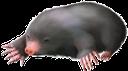 фауна, животные, крот, animals, tiere, maulwurf, faune, animaux, taupe, animales, mole, animali, talpa, fauna, animais, toupeira