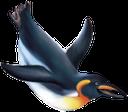 фауна, птицы, пингвин, bird, penguin, vogel, pinguin, faune, oiseau, pingouin, pájaro, pingüino, uccello, pinguino, fauna, pássaro, pinguim