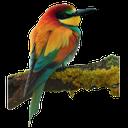 птица на ветке, птица, bird, vogel, oiseau, pájaro, uccello, pássaro