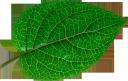 зеленый лист, green leaf, grünes blatt, blatt zimmerpflanze, feuille verte, hoja verde, foglia verde, folha verde