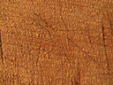 текстура дерево, texture tree, textur des holzes, la texture du bois, textura de la madera, trama di legno, textura de madeira