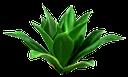 драцена душистая, фрагранс, зеленый куст, драцена вечнозеленое растение, комнатное растение, dracaena fragrant, green bush, dracaena evergreen, indoor plant, grünen busch, dracaena immergrün, zimmerpflanze, buisson vert, à feuilles persistantes dracaena, houseplant, árbol de hoja perenne dracaena, planta de interior, cespuglio verde, sempreverde dracaena, pianta d'appartamento, dracaena fragrans, fragrans, arbusto verde, evergreen dracaena, planta de casa