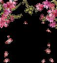 розовые цветы, цветущее дерево, ветка дерева, pink flowers, flowering tree, spring, tree branch, rosa blumen, blühender baum, frühling, ast, fleurs roses, arbre en fleurs, printemps, branche d'arbre, flore, flores rosadas, árbol floreciente, rama de árbol, fiori rosa, albero in fiore, ramo di un albero, flores rosa, árvore florida, primavera, ramo da árvore, flora, рожеві квіти, квітуче дерево, весна, гілка дерева, флора