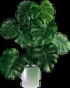 комнатные растения, вазон, пальма, зеленое растение, indoor plants, flowerpot, palm, green plant, zimmerpflanzen, blumentopf, palme, grünpflanze, plantes d'intérieur, pot de fleur, palmier, plante verte, maceta, palmera, piante d'appartamento, vaso di fiori, pianta verde, plantas de interior, vaso de plantas, palma, planta verde, кімнатні рослини, зелена рослина