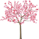 сакура, японская вишня, розовый цветок, ветка сакуры, дерево сакура, зеленое растение, дерево, весенние цветы, флора, japanese cherry, pink flower, sakura branch, sakura tree, green plant, tree, spring flowers, japanische kirsche, rosa blume, sakura-zweig, sakura-baum, grüne pflanze, baum, frühlingsblumen, cerise japonaise, fleur rose, branche de sakura, arbre de sakura, plante verte, arbre, fleurs de printemps, flore, cereza japonesa, rama de sakura, árbol de sakura, árbol, flores de primavera, sakura, ciliegia giapponese, fiore rosa, ramo di sakura, albero di sakura, pianta verde, albero, fiori di primavera, cerejeira japonesa, flor rosa, ramo de sakura, árvore de sakura, planta verde, árvore, flores da primavera, flora, японська вишня, рожева квітка, гілка сакури, зелена рослина, весняні квіти