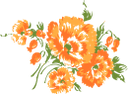 оранжевый цветок, цветы, зеленое растение, флора, orange flower, flowers, green plant, orange blume, blumen, grüne pflanze, fleur d'oranger, fleurs, plante verte, flore, flor de naranja, fiori d'arancio, fiori, piante verdi, flor de laranjeira, flores, planta verde, flora, помаранчевий квітка, квіти, зелена рослина