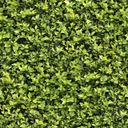 текстура природа, зеленый лист, экология, texture nature, green leaf, ecology, textur natur, grünes blatt, ökologie, nature texture, feuille verte, l'écologie, textura de la naturaleza, hoja verde, ecología, tessitura natura, foglia verde, textura natureza, folha verde, ecologia, зелений лист, екологія, куст растения, зеленое растение