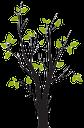 дерево, зеленое растение, весна, tree, green plant, baum, grüne pflanze, spring, arbre, plante verte, le printemps, árbol, albero, pianta verde, la primavera, árvore, planta verde, primavera, зелена рослина