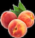 персик, спелый персик, плод дерева персик, peach, ripe peach, fruit tree peach, pfirsich, reifer pfirsich, pfirsichbaum früchte, pêche, pêche mûre, arbre de fruits de pêche, melocotón, melocotón maduro, fruta del árbol de melocotón, pesca, pesca matura, pesco frutta, pêssego, pêssego maduro, frutas pessegueiro