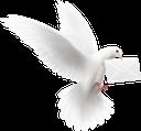 голубь, белый голубь, голубь мира, белая птица, отряд пернатых, пернатые, птицы, dove, white dove, dove of peace, white bird, squad of birds, birds, taube, weiße taube, friedenstaube, weißer vogel, vogelgruppe, vögel, colombe, colombe blanche, colombe de la paix, oiseau blanc, escouade d'oiseaux, oiseaux, paloma, paloma blanca, paloma de la paz, pájaro blanco, escuadrón de pájaros, pájaros, colomba, colomba bianca, colomba della pace, uccello bianco, squadra di uccelli, uccelli, pomba, pomba branca, pomba da paz, pássaro branco, esquadrão de pássaros, pássaros, голуб, білий голуб, голуб миру, білий птах, загін пернатих, пернаті, птиці, письмо, почтовый голубь