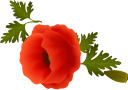 красный мак, полевые цветы, букет цветов, зеленое растение, красные маки, цветы, флора, red poppy, wildflowers, bouquet of flowers, green plant, red poppies, flowers, rote mohnblume, wildblumen, blumenstrauß, grüne pflanze, rote mohnblumen, blumen, pavot rouge, fleurs sauvages, bouquet de fleurs, plante verte, coquelicots rouges, flore, fleurs, amapola roja, ramo de flores, amapolas rojas, papavero rosso, fiori di campo, bouquet di fiori, pianta verde, papaveri rossi, fiori, papoila vermelha, flores silvestres, buquê de flores, planta verde, papoilas vermelhas, flora, flores, червоний мак, польові квіти, букет квітів, зелена рослина, червоні маки, квіти