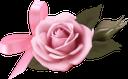 цветок розы, красная роза, цветы, flower roses, red rose, flowers, rose blume, rote rose, blumen, fleur rose, rose rouge, fleurs, flor color de rosa, rosa rojo, fiore rosa, rosa rossa, fiori, flor rosa, rosa vermelha, flores, квітка троянди, червона троянда, квіти