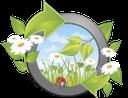 ромашка полевая, chamomile field, ромашка польова, цветы, божья коровка, экология, квіти, сонечко, екологія, flowers, ladybug, ecology, daisy-feld, blumen, marienkäfer, ökologie, pâquerette, fleurs, coccinelle, écologie, campo de margaritas, mariquita, ecología, margherita di campo, fiori, coccinella, campo da margarida, flores, joaninha, ecologia