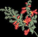 цветы, оранжевые цветы, флористика, флора, flowers, orange flowers, floristics, blumen, orange blumen, floristik, fleurs, fleurs d'oranger, floristique, flore, flores naranjas, fiori, fiori d'arancio, floristica, flores, flores de laranjeira, florística, flora, квіти, помаранчеві квіти