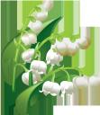 ландыши, белые цветы, ландыш майский, цветы, белый цветок, первоцвет, флора, maiglöckchen, weiße blumen, maiglöckchen mai, blumen, weiße blume, frühling, primel, lis de la vallée, fleurs blanches, muguet peuvent, fleurs, fleur blanche, printemps, primevère, flore, lirios del valle, flores blancas, lirio de los valles puede, flor blanca, mughetti, fiori bianchi, mughetto maggio, fiori, fiore bianco, primula, lírios do vale, flores brancas, lírio do vale, flores, flor branca, primavera, prímula, flora, конвалії, білі квіти, конвалія травнева, квіти, біла квітка, весна, першоцвіт
