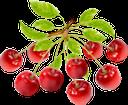 черешня, ветка черешни, красная ягода, ягода черешни, cherry, a cherry branch, a red berry, a cherry berry, kirsche, eine kirschniederlassung, eine rote beere, eine kirschbeere, cerise, une branche de cerise, une baie rouge, une baie de cerise, cereza, una rama de cereza, una baya roja, una cereza de bayas, ciliegia, un ramo di ciliegio, una bacca rossa, una bacca di ciliegia, cereja, um ramo de cereja, uma baga vermelha, uma baga de cereja, гілка черешні, червона ягода, ягода черешні