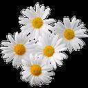 ромашка, белый цветок, полевые цветы, daisy, white flower, wild flowers, gänseblümchen, weiße blume, wildblumen, marguerite, fleur blanche, fleurs sauvages, margarita, flor blanca, margherita, fiore bianco, fiori di campo, margarida, flor branca, flores silvestres
