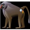 baboon, 256