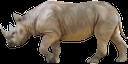 фауна, животные, носорог, animals, rhinoceros, tiere, nashörner, faune, animaux, rhinocéros, animales, animali, fauna, animais, rinoceronte