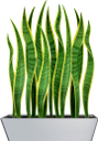 комнатные растения, вазон, сансевиерия, зеленое растение, растение тещин язык, houseplants, flowerpot, green plant, mother-in-law's plant language, zimmerpflanzen, blumentopf, grüne pflanze, pflanzensprache der schwiegermutter, plantes d'intérieur, pot de fleurs, plante verte, langage végétal de la belle-mère, plantas de interior, maceta, lenguaje vegetal de la suegra, piante d'appartamento, vaso di fiori, pianta verde, linguaggio vegetale della suocera, plantas de casa, vaso de flores, sansevieria, planta verde, linguagem vegetal da sogra, кімнатні рослини, сансевієрія, зелена рослина, рослина тещин язик