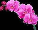 орхидея, цветок орхидеи, распустившийся цветок, зеленое растение, цветы, флора, orchid, orchid flower, blossoming flower, green plant, flowers, orchidee, orchideenblüte, blühende blume, grüne pflanze, blumen, orchidée, fleur d'orchidée, fleur épanouie, plante verte, fleurs, flore, flor de orquídea, flor floreciente, orchidea, fiore di orchidea, fiore che sboccia, pianta verde, fiori, orquídea, flor da orquídea, flor desabrochando, planta verde, flores, flora, орхідея, квітка орхідеї, розквітла квітка, зелена рослина, квіти
