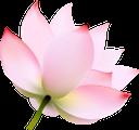 лотос, цветок лотоса, лотос орехоносный, зеленое растение, цветы, флора, lotus flower, nutty lotus, green plant, flowers, lotusblume, nussiger lotus, grüne pflanze, blumen, lotus, fleur de lotus, lotus aux noix, plante verte, fleurs, flore, flor de loto, loto de nuez, loto, fiore di loto, loto ricco di noci, pianta verde, fiori, lótus, flor de lótus, noz lótus, planta verde, flores, flora, квітка лотоса, індійський лотос, зелена рослина, квіти