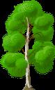береза, зеленое растение, дерево, birch, green plant, tree, birke, grüne pflanze, baum, bouleau, plante verte, arbre, abedul, árbol, betulla, pianta verde, albero, vidoeiro, planta verde, árvore, зелена рослина