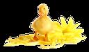 утенок, желтый утенок, желтый цветок, желтый, duck, yellow duck, yellow flower, yellow, ente, gelbe ente, gelbe blume, gelb, canard, canard jaune, fleur jaune, jaune, pato amarillo, flor amarilla, amarillo, anatra, anatra gialla, fiore giallo, giallo, pato, pato amarelo, flor amarela, amarelo
