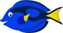 рыба хирург, морская рыба, рыбы кораллового рифа, морская фауна, океанические рыбы, fish surgeon, sea fish, coral reef fish, marine fauna, ocean fish, fischchirurg, seefisch, korallenrifffisch, meeresfauna, meeresfisch, chirurgien de poisson, poisson de récif corallien, faune marine, poisson de mer, cirujano de peces, peces de arrecife de coral, peces de mar, chirurgo del pesce, pesce di mare, pesci della barriera corallina, fauna marina, pesci dell'oceano, cirurgião de peixes, peixes do mar, peixes de recife de coral, fauna marinha, peixes do oceano, риба хірург, морська риба, риби коралового рифу, морська фауна, океанічні риби