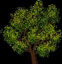 лиственное дерево, зеленое растение, флора, дерево, deciduous tree, green plant, tree, laubbaum, grüne pflanze, baum, arbre à feuilles caduques, plante verte, flore, arbre, árbol de hoja caduca, las plantas verdes, árbol, albero a foglie decidue, pianta verde, albero, árvore de folha caduca, planta verde, flora, árvore, листяне дерево, зелена рослина