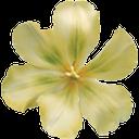 цветок орхидеи, желтая орхидея, orchid flower, yellow orchid, orchidee, gelbe orchidee, orchidée, orchidée jaune, orquídea amarilla, orchidea, orchidea gialla, orquídea, orquídea amarela