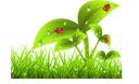 экология, зеленое растение, зеленая трава, божья коровка, ecology, green plant, green grass, ladybug, ökologie, grüne pflanze, grünes gras, marienkäfer, écologie, plante verte, l'herbe verte, coccinelle, ecología, hierba verde, mariquita, ecologia, planta verde, grama, joaninha, лист
