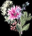 цветы, хризантема, букет цветов, розовый цветок, флора, flowers, chrysanthemum, bouquet of flowers, pink flower, blumen, chrysantheme, blumenstrauß, rosa blume, fleurs, chrysanthème, bouquet de fleurs, fleur rose, flore, ramo de flores, flor rosada, fiori, crisantemo, bouquet di fiori, fiore rosa, flores, crisântemo, buquê de flores, flor rosa, flora, квіти, букет квітів, рожева квітка