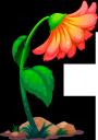 цветы, оранжевый цветок, флористика, флора, flowers, orange flower, floristics, blumen, orange blume, floristik, fleurs, fleur d'oranger, floristique, flore, flor de naranja, fiori, fiori d'arancio, floristica, flores, flor de laranjeira, florística, flora, квіти, помаранчева квітка