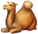 фауна, животные, парнокопытные, верблюд, animals, cloven-hoofed, camel, tiere, paarhufer, kamel, faune, animaux, biongulé, chameau, animales, de pezuña hendida, camello, animali, biungulati, cammello, fauna, animais, biungulados, camelo