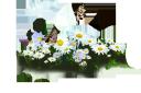 белые цветы, белые ромашки, бабочка на ромашке, полевая ромашка, white flowers, white daisies, butterfly on chamomile, field chamomile, weiße blüten, weiße gänseblümchen, ein schmetterling auf einer daisy, daisy-feld, fleurs blanches, marguerites blanches, un papillon sur une marguerite, champ de marguerite, flores blancas, margaritas blancas, una mariposa en una margarita, campo de margarita, fiori bianchi, margherite bianche, una farfalla su una margherita, margherita di campo, flores brancas, margaridas brancas, uma borboleta em uma margarida, campo da margarida