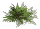 зеленый папоротник, куст папоротника, зеленый лист, green fern, bush fern, green leaf, grüne farne, farn busch, grünes blatt, fougères vert, fougère brousse, feuille verte, helechos verdes, helecho bush, hoja verde, felci verdi, felce bush, foglia verde, samambaias verdes, arbusto fern, folha verde