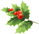 новый год, новогоднее украшение, праздничное украшение, праздник, красные ягоды, ветка дерева, new year, christmas decoration, holiday decoration, holiday, red berries, tree branch, neues jahr, weihnachtsdekoration, feiertagsdekoration, feiertag, rote beeren, baumast, nouvel an, décoration de noël, décoration de vacances, vacances, fruits rouges, branche d'arbre, año nuevo, decoración navideña, fiesta, frutos rojos, rama de árbol., capodanno, decorazione natalizia, decorazione di festa, vacanza, bacche rosse, ramo di un albero, ano novo, decoração natal, decoração feriado, feriado, bagas vermelhas, filial árvore, новий рік, новорічна прикраса, святкове прикрашання, свято, червоні ягоди, гілка дерева