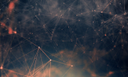 абстрактные текстуры, полигон текстура, фоновое изображение, abstract texture, polygon texture, background image, abstrakte textur, polygon textur, hintergrundbild, texture abstraite, texture de polygone, image de fond, textura abstracta, imagen de fondo, struttura astratta, struttura del poligono, immagine di sfondo, textura abstrata, textura de polígono, imagem de fundo, абстрактні текстури, полігон текстура, фонове зображення
