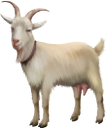 фауна, животные, парнокопытные, коза, animals, cloven-hoofed, goat, tiere, paarhufer, ziege, faune, animaux, biongulé, chèvre, animales, de pezuña hendida, animali, biungulati, capra, fauna, animais, biungulados, cabra
