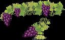 виноград, гроздь винограда, ягода, виноградная лоза, grapes, bunch of grapes, berry, grapevine, trauben, traube, beere, wein, raisins, raisin, baies, vigne, baya, vid, frutti di bosco, vite, uvas, uva, baga, videira, гроно винограду, виноградна лоза