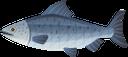 морская рыба, океаническая рыба, морские обитатели, морская фауна, рыбы, морепродукты, marine fish, ocean fish, marine life, marine fauna, fish, seafood, meeresfische, meereslebewesen, meeresfauna, fische, meeresfrüchte, poisson marin, poisson océanique, vie marine, faune marine, poisson, fruits de mer, peces marinos, peces oceánicos, vida marina, peces, mariscos, pesci marini, pesci oceanici, vita marina, fauna marina, pesci, frutti di mare, peixes marinhos, peixes do oceano, vida marinha, fauna marinha, peixes, frutos do mar, морська риба, океанічна риба, морські мешканці, морська фауна, риби, морепродукти