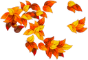желтый лист, осенняя листва, осень, yellow leaf, autumn foliage, autumn, fall leaves, gelbes blatt, herbstlaub, herbst, entblätterung, feuille jaune, feuillage d'automne, automne, défoliation, hoja amarilla, follaje de otoño, otoño, defoliación, foglia gialla, fogliame autunnale, autunno, defogliazione, folha amarela, folha do outono, outono, desfolha, жовтий лист, осіннє листя, осінь, листопад