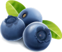 черника, ягода черники, синяя ягода, синий, blueberries, blue berries, blue, blaubeeren, blaue beeren, blau, myrtilles, bleuets, baies bleues, bleu, arándanos, bayas azules, mirtilli, bacche blu, blu, mirtilos, bagas azuis, azul, чорниця, ягода чорниці, синя ягода, синій