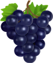 виноград, гроздь винограда, синий виноград, винная ягода, виноделие, grapes, a bunch of grapes, blue grapes, wine berry, winemaking, trauben, eine weintraube, blaue trauben, weinbeeren, weinbereitung, raisin, grappe de raisin, raisin bleu, baie de vin, vinification, un racimo de uvas, uvas azules, bayas de vino, elaboración del vino, uva, un grappolo d'uva, uva blu, bacca del vino, vinificazione, uvas, um cacho de uvas, uvas azuis, vinho berry, vinificação, гроно винограду, синій виноград, винна ягода, виноробство