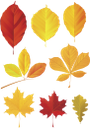 листья, желтый лист, кленовый лист, осень, leaves, yellow leaf, maple leaf, autumn, blätter, gelbes blatt, ahornblatt, ahorn, herbst, feuilles, feuille jaune, feuille d'érable, érable, automne, hojas, hoja amarilla, hoja de arce, arce, otoño, foglie, foglia gialla, foglia d'acero, acero, autunno, folhas, folha amarela, folha de bordo, maple, outono, листя, жовтий лист, кленовий лист, клен, осінь
