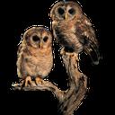 совята, сова, филин, птица, eule, uhu, vogel, hibou, aigle, oiseau, búho, búho real, ave, civetta, gufo reale, uccello, coruja, águia, pássaro