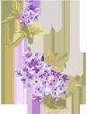 сирень, цветы, голубая сирень, голубые цветы, флора, весна, lilac, flowers, blue lilac, blue flowers, spring, flieder, blumen, blaue flieder, blaue blumen, frühling, lilas, fleurs, lilas bleu, fleurs bleues, flore, printemps, lila, azul lila, flores azules, lilla, fiori, lilla blu, fiori blu, lilás, flores, lilás azul, flores azuis, flora, primavera, бузок, квіти, блакитний бузок, блакитні квіти